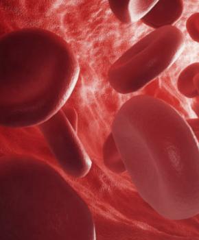 Ткани, кровь и ее компоненты